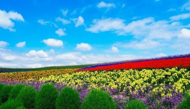 北海道の観光地 ラベンダー畑と青空イメージ画像