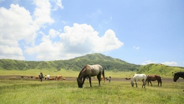 九州地方の観光イメージ画像「草千里」