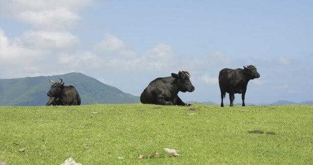 中国地方の観光スポット「島根県の放牧の様子」のイメージ画像