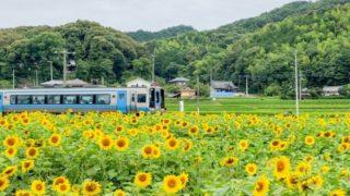 四国のひまわり畑イメージ